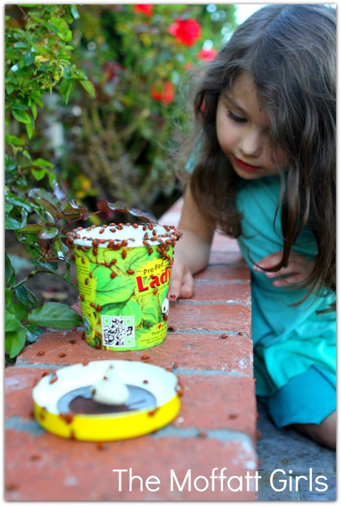 FUN with Ladybugs!